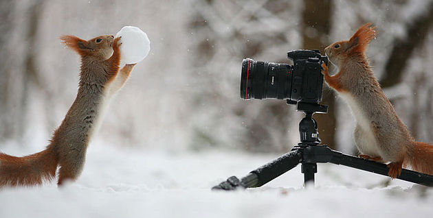 The Winter is Here: Tips for Shooting in the Snow